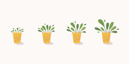Potted plant growth stages. Home plant steadily grow in pot. From little sprout to lush foliage. Vector illustration, modern flat style Ilustrace