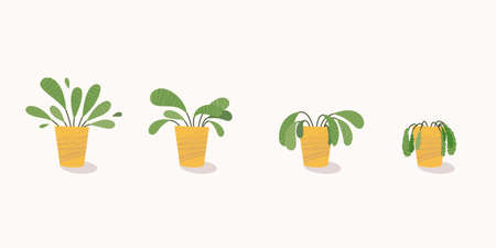 Stages of withering, a wilted plant in a pot, abandoned houseplant without watering and care. Potted plant dying. Vector illustration Ilustracja