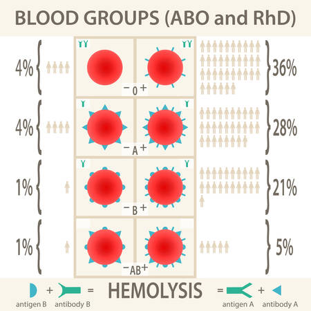 antigen: The ABO and RhD blood groups systems diagram and infographic. Vector Illustration EPS10.