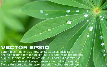 placeholder: Close-up of fresh green leaves and water drops realistic background with a placeholder. Vector illustration EPS10.