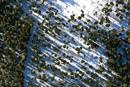 aerial view forest photo