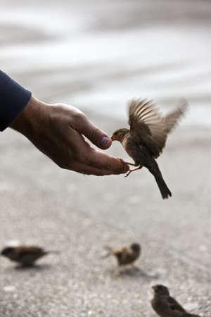 responsabilidad: Bird alimentar la mano con la luz disponible maravilloso después de un poco de lluvia