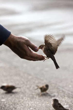 Bird feeding hand with wonderful available light after some rain Imagens