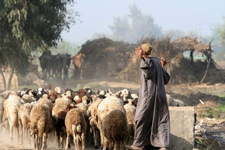 Herder in egypt photo