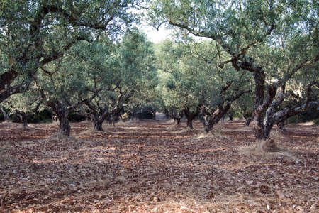 olivegrove photo