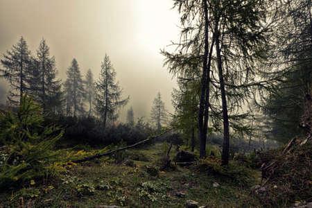 Een mystieke bos met mist en schijnt achter de bomen Stockfoto