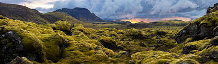 wooly: Surreal landscape with wooly moss of Iceland.