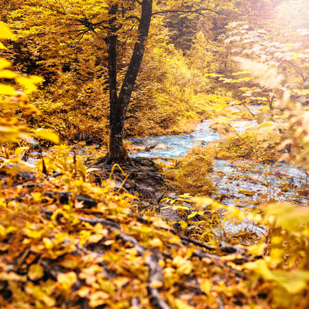 Autumn forest with tree at a water spring Stock Photo