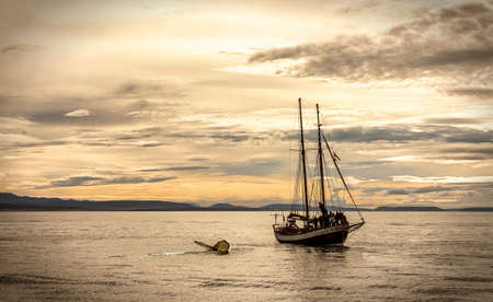 A sailboat next to a whale diving down the coast of Iceland at sunset Stock Photo