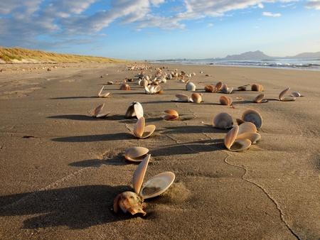 Seashells in the morningsun on a huge deserted beach photo