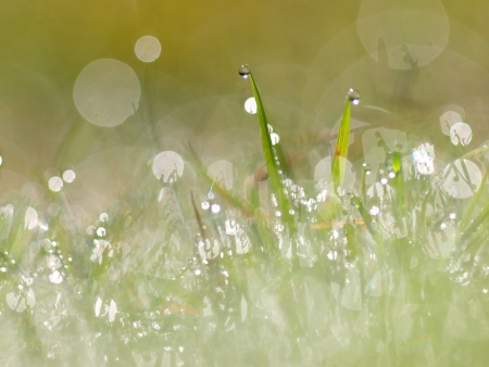 Close-up of morning dew in meadow with incredible reflections Stock Photo