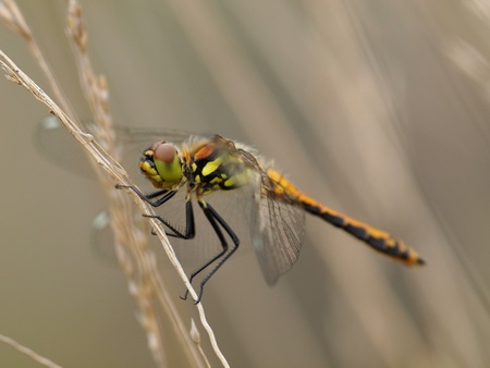 dragonfly resting on twig photo