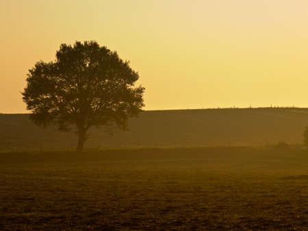 lonely tree during misty sunrise Stock Photo - 10834509