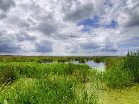 summer afternoon in dutch swamp nature reserve photo