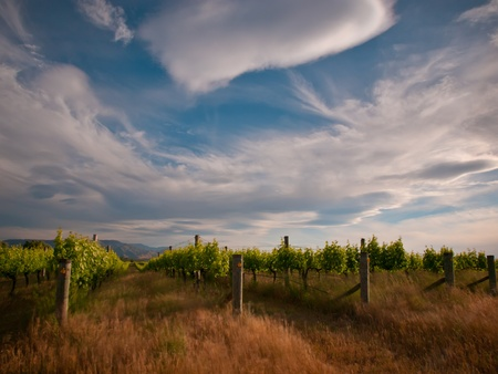 new zealand vineyard under dramatic sky with long exposure blur photo