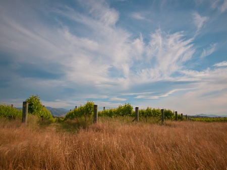 new zealand vineyard with blurred grass and vegetation by long exposure Stock Photo - 10834521