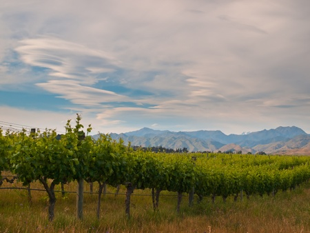 lenticular: new zealand vineyard sideview under dramatic sky with lenticular clouds