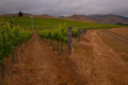 Organic vineyard with wind turbine in the field photo