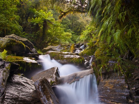 waterfall in a lush new zealand forest photo