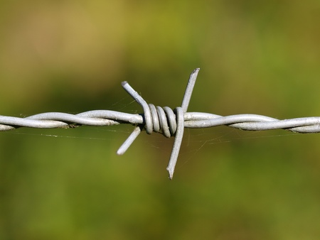 fencing wire: close up of barbed wire with green background