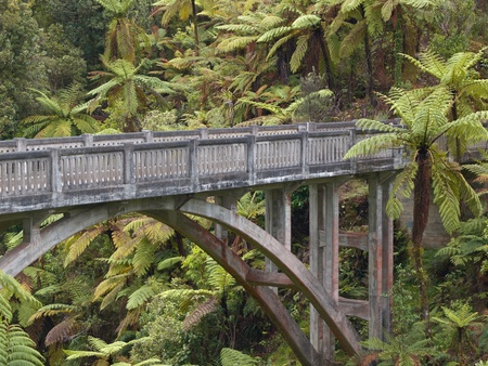 bridge over water: A concrete bridge in the middle of the jungle surrounded by palm trees