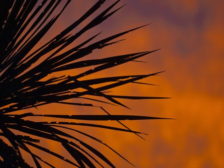 palmtree: sihouette of a palmtree during sunset