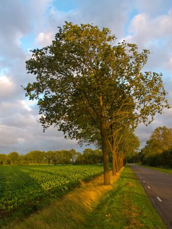 A row of trees in the wind along a country road Stock Photo - 10834436