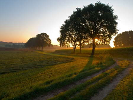 sunrise through a tree along an agricultural track Stock Photo - 10834463