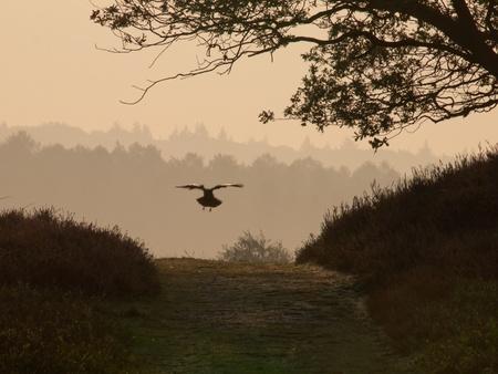 vogelspuren: Crow ist zur Landung auf dem richtigen Weg