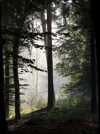 posbank: Forest silhouette with misty background