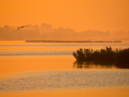 meer: Orange glow sunrise at lake with flying bird