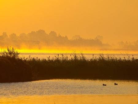 meer: Orange glow sunrise behind reed with ducks on foreground