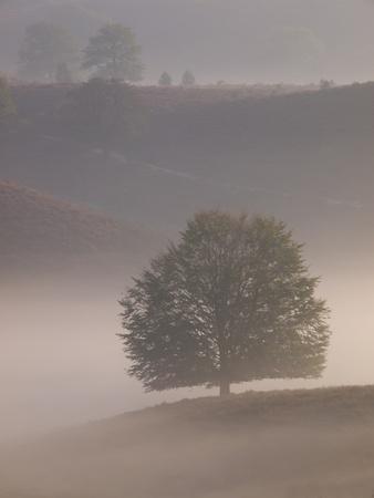 posbank: Portrait tree silhouette on hill