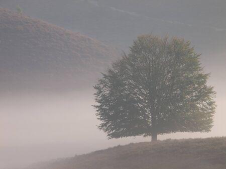 posbank: Tree silhouette on hill