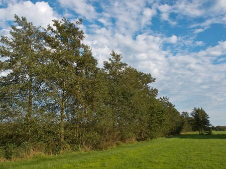 alder: A row of trees in typical dutch agricultural landscape
