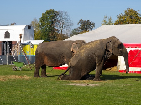 Circus animals are waiting for the show photo