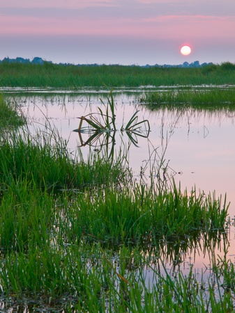 swamp: colorful sunset over fresh water marshland nature reserve