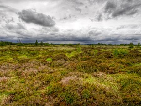 heathland: Dutch heathland under dramatic sky