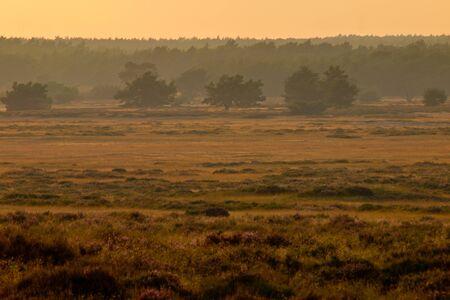 heathland: Heathland scene during sunset Stock Photo
