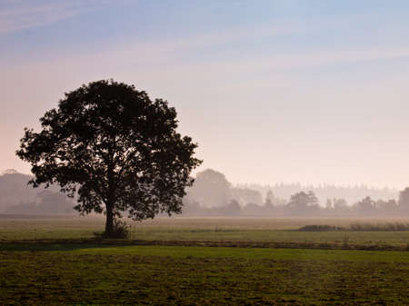 Lonely tree in agricultural landscape during morning mist Stock Photo - 11334396