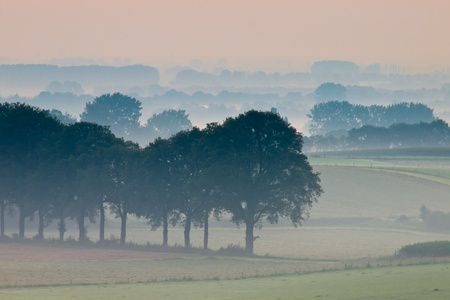 Row of trees in hazy landscape Stock Photo - 11334385
