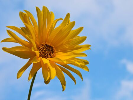 Yellow blooming flower against blue sky photo