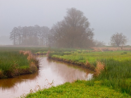 meandering: meandering stream on a misty afternoon