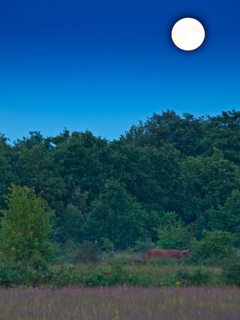 proportional bright full moon above forest edge photo