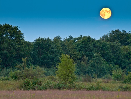 proportional: proportional full moon above forest edge
