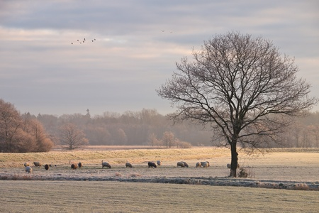 opaque: Tree and sheep in rimed winter landscape while a flock of bird is passing by