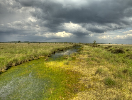 Brooding summer sky above swamp nature reserve Stock Photo - 12422156