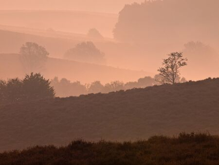 posbank: Trees during sunrise in silhoutted hilly landscape