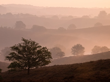 Silhouette of a tree in a hilly landscape