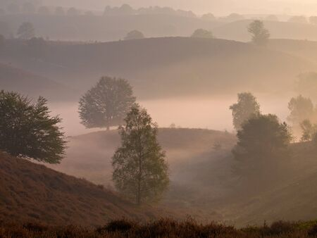 posbank: Trees look like silhouettes in a hilly misty landscape during sunrise